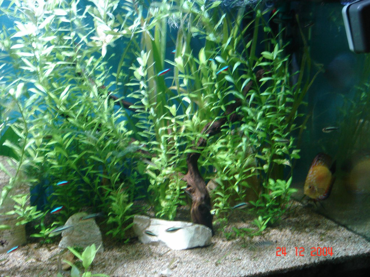 Eau douce amazonien for Racine aquarium