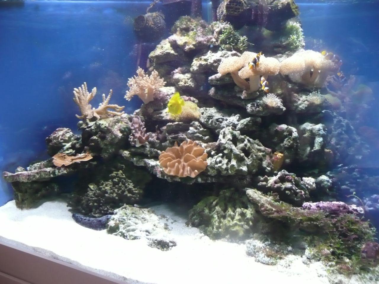 Décor Aquarium Récifal Trouvetonjumeau