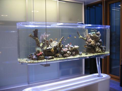 Aquarium 96l plastique forum aquarium for Aquarium plastique